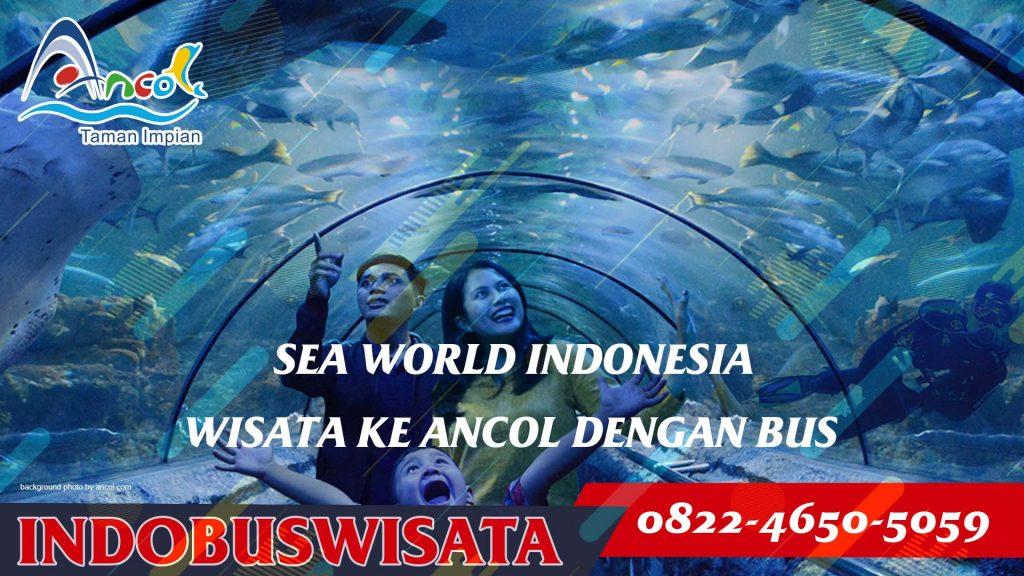 Destinasi Wisata Ancol Dengan Bus - Sea World Indonesia - Indobuswisata