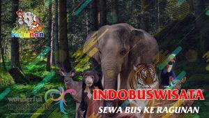 Sewa Bus Ke Ragunan - Indobuswisata